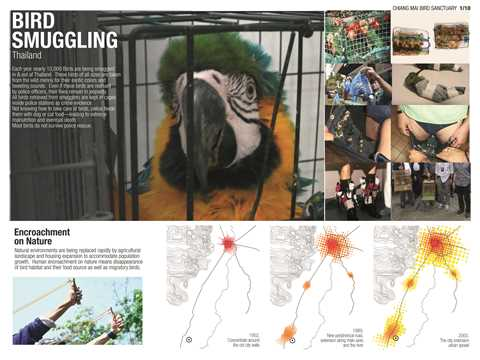 Project Entry 2014 Asia Pacific - Protective Wing: Bird sanctuary, Chiang Mai, Thailand