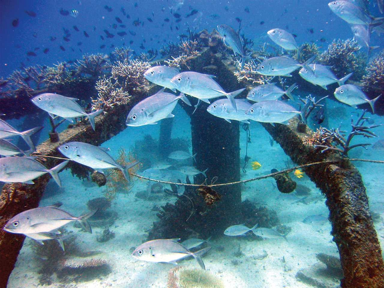 Marine biodiversity and fish stocks are vital for local communities who rely on fishing …