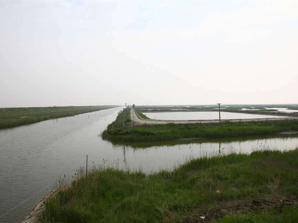 Chongming8.jpg