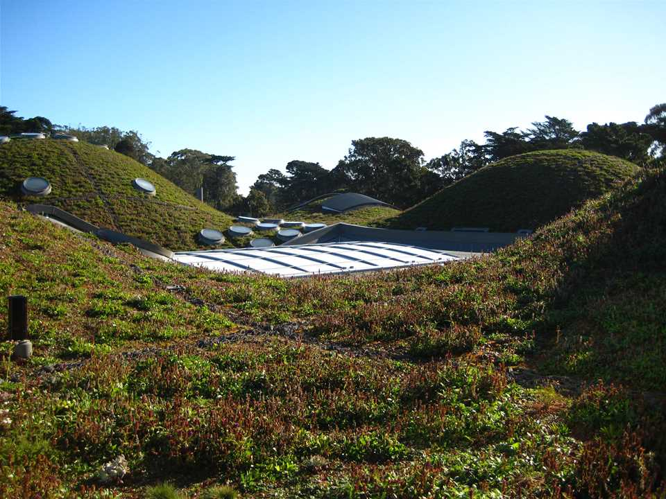 Image result for the top of san francisco academy of science building living garden