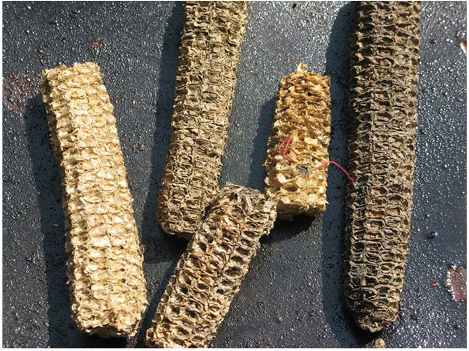 Affordable building materials from recycled agricultural waste for Recycling of waste material