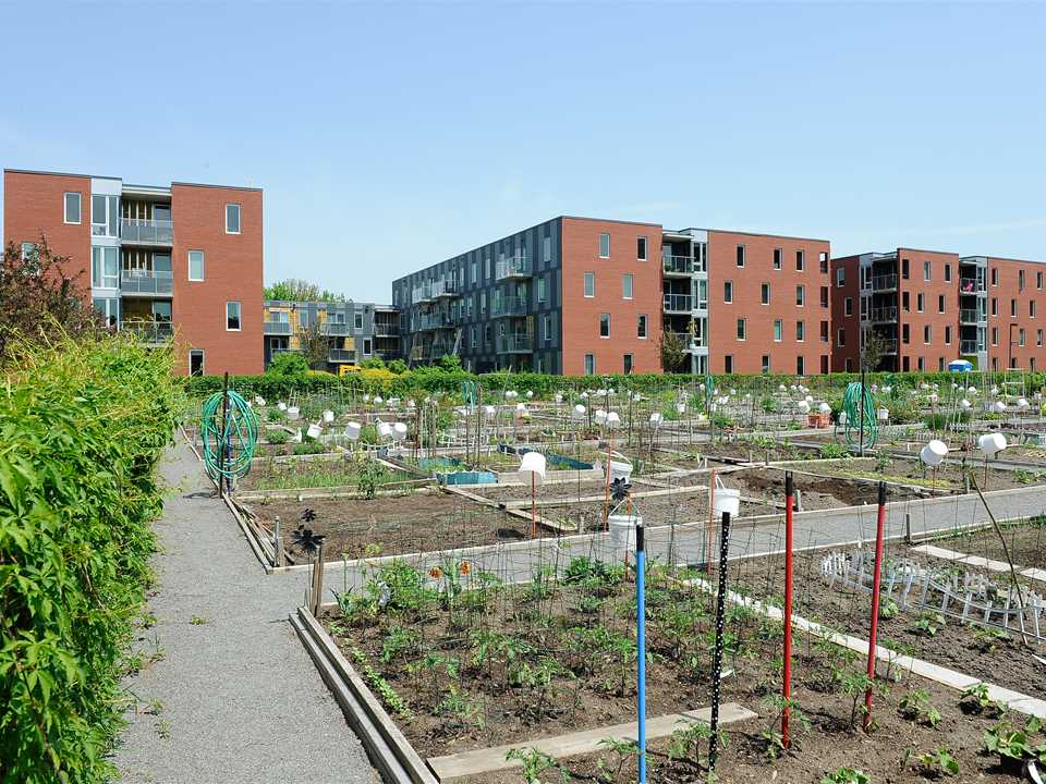 Project update August 2011 – Greening the Infrastructure at Benny Farm, Montreal, QC, Canada