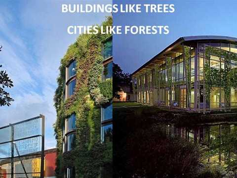 A building like a tree, a city like a forest